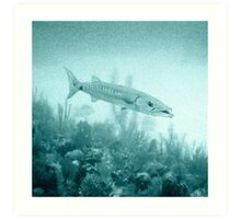Great Barracuda Art Print