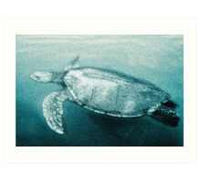 Green Turtle Surfacing - Grand Cayman Art Print