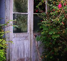 My Sorry Looking Garden Shed by lezvee