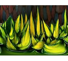 Leaves in abstract Photographic Print