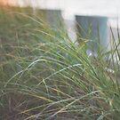 Sunset Through Beach Grass by Bethany Helzer