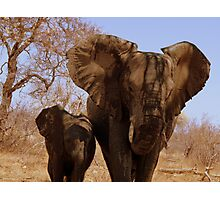 'Mother and Baby' - Balule, South Africa Photographic Print