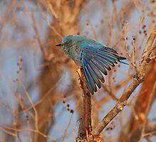 Feather display by Eivor Kuchta