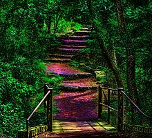 Enchanted Path by soonerphoto