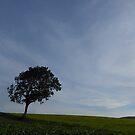 Norfolk Skies. by Paul Pasco