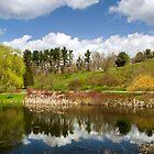 Spring Reflection Landscape by Christina Rollo