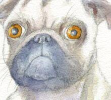 Pug portrait Sticker