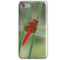 The Red Baron iPhone Case/Skin