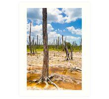 Intriguing Forest On The Yucatán Coast Near Celestún Mexico Art Print