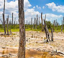 Intriguing Forest On The Yucatán Coast Near Celestún Mexico by Mark Tisdale