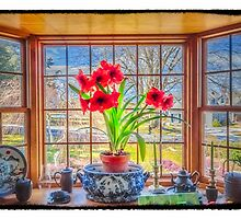 Amaryllis view of Spring by Owed To Nature