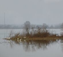 Herons In The Fog by WildestArt