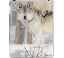 Stare - Timber Wolf iPad Case/Skin