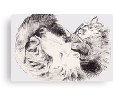 Sleepy Fluffy Kitty Canvas Print