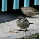 Little Finch by Jason Dymock Photography