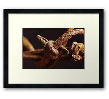 Rusty Wire Framed Print