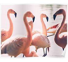 Pink Flamingo Flock Poster