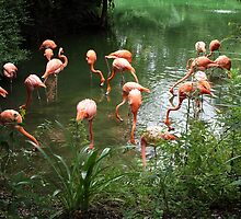 Flamingos by Carol Bailey White