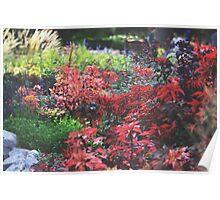 Shade Garden Poster