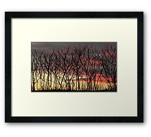Natural fence Framed Print