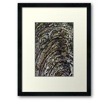 Tree Rings Framed Print