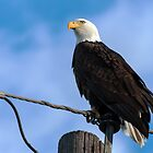 Bald Eagle on pole by Eivor Kuchta