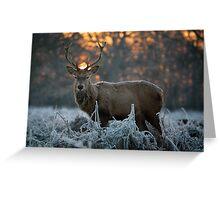 Christmas stag 3 Greeting Card