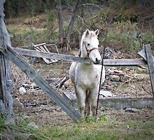 He IS a Pony,He Has Himself by Paul Lubaczewski