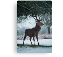 Christmas  Stag 10 Canvas Print