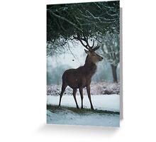Christmas  Stag 10 Greeting Card