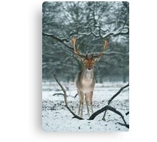 Christmas  Stag 5 Canvas Print