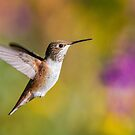 Color in Suspension -- Rufous Hummingbird by Tom Talbott