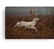 Christmas  Stag 8 Canvas Print