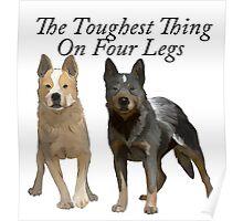 Australian Cattle Dogs 2 Poster