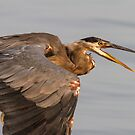 Exploring Prehistoric Roots - Great Blue Heron by Tom Talbott