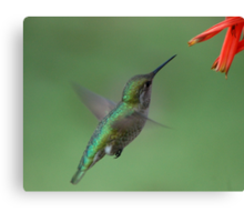 For me New Year means....a lot of hummingbirds Canvas Print
