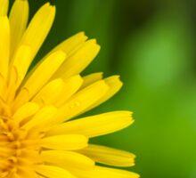 large yellow blooming dandelion  Sticker