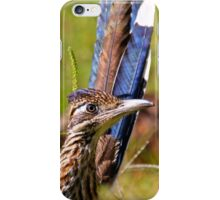 Gorgeous Chaparral Cock, a Ground Cuckoo, and a Snake Killer 2 iPhone Case/Skin