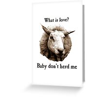 Baby Don't Herd Me Sheep Greeting Card
