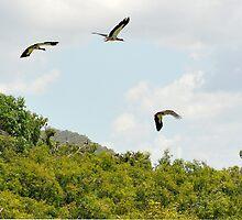 Birds in Flight,Wetlands near Cooktown by Michael Crameri