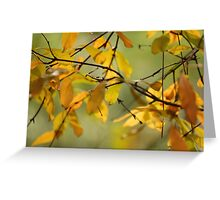 Fall Leaves VI Greeting Card