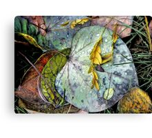 Nature's Paint Box Canvas Print