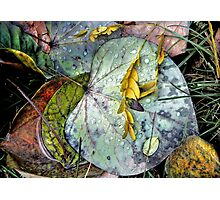 Nature's Paint Box Photographic Print
