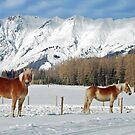 Horses in the snow by Arie Koene