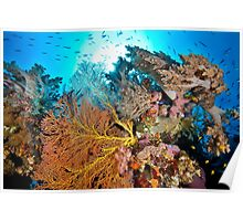 Soft coral tranquility Poster
