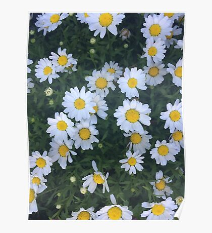 are we out of the flower patch Poster