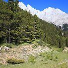 Hiking with wildlife by zumi