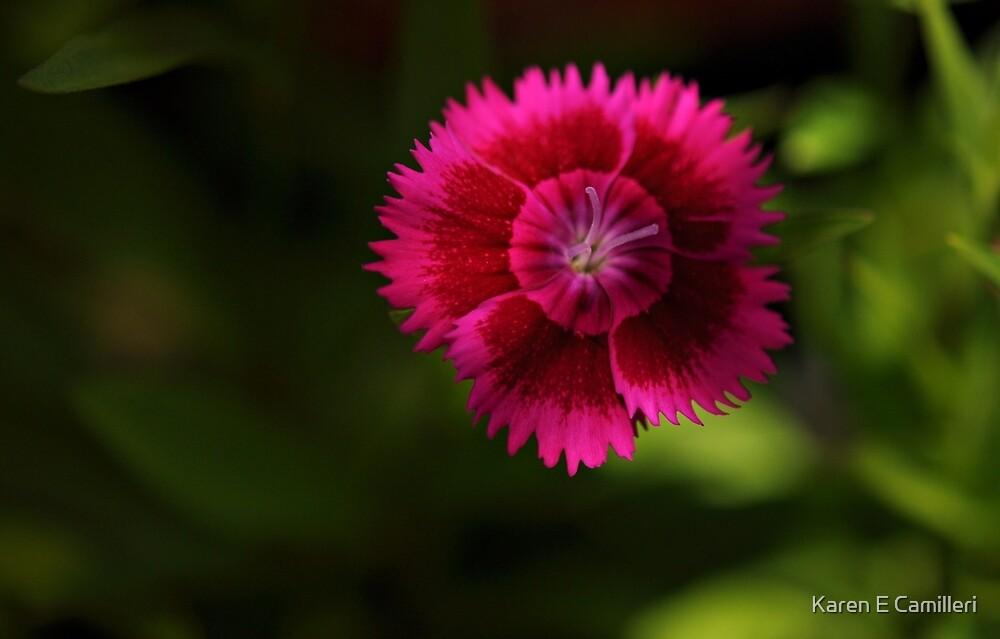 bright spot by Karen E Camilleri
