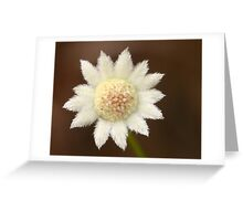 Actinotus minor .. The Lesser Flannel Flower   Greeting Card