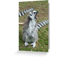 The anger of the Ring-Tailed Lemur - Monkey World, Dorset  Greeting Card